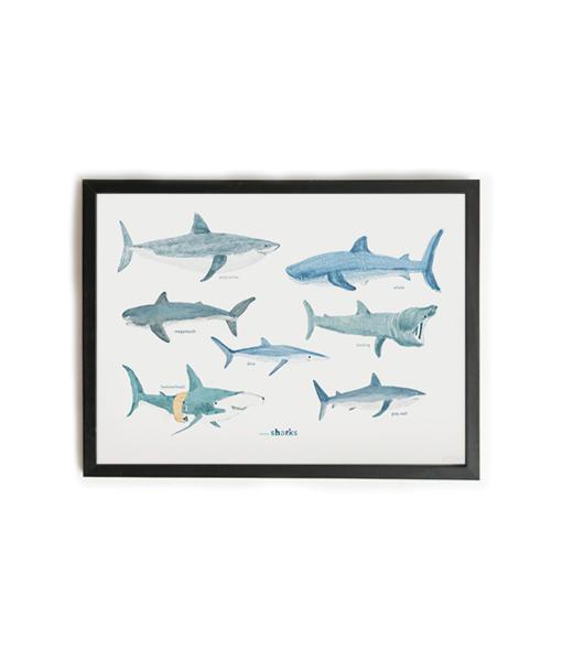 Eïghtbear | Some sharks